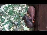 Трогательный Зоопарк Набережные Челны - Скинни