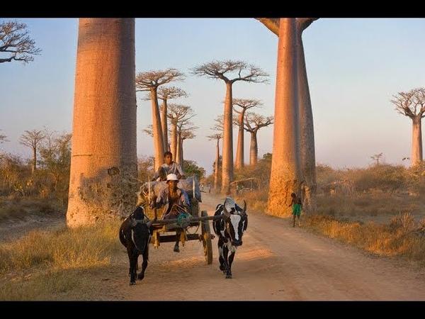 Райский остров Мадагаскар | Странник КН