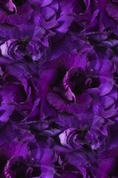 Цветочные и растительные фоны - Страница 2 GdXm6We9NJg