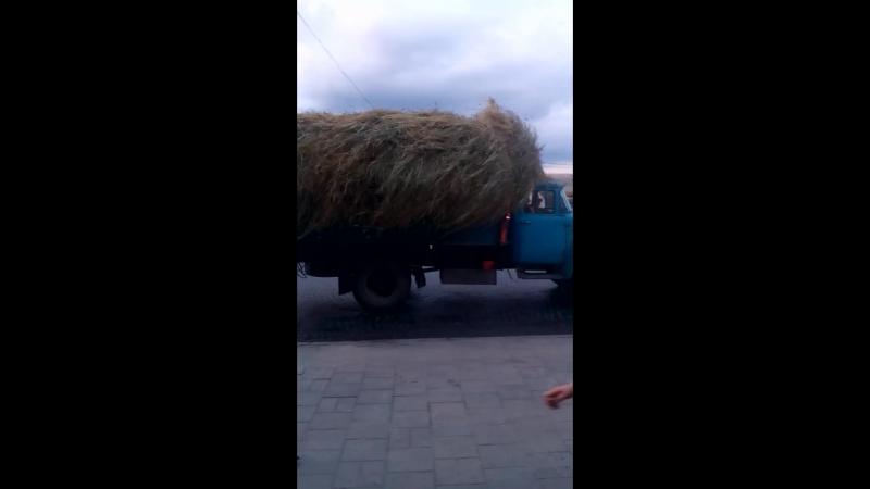 Сіно у Львові
