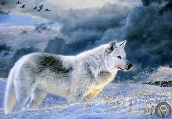 Животный мир художницы Бонни Марис. часть 2 ВОЛКИ Седой туман сгустился над оврагом, С укором смотрит вновь на нас луна, И мы идем с тобой неторопливым шагом. Идем по жизни. Ты один и я одна. И