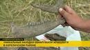 Уникальные находки времён ВКЛ обнаружили археологи в Кореличском районе