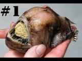 Самые уродливые и страшные животные мира #1