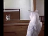 Кот впервые открыл у себя уши