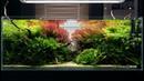 A BEAUTIFUL MATURED AQUASCAPE WITH LIVE AQUARIUM PLANTS - CINEMATIC SHORT