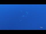 Акулы Судан