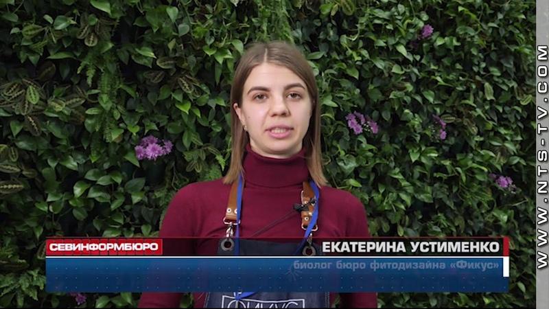 К Международному женскому дню в симферопольском аэропорту зацвела зеленая стена