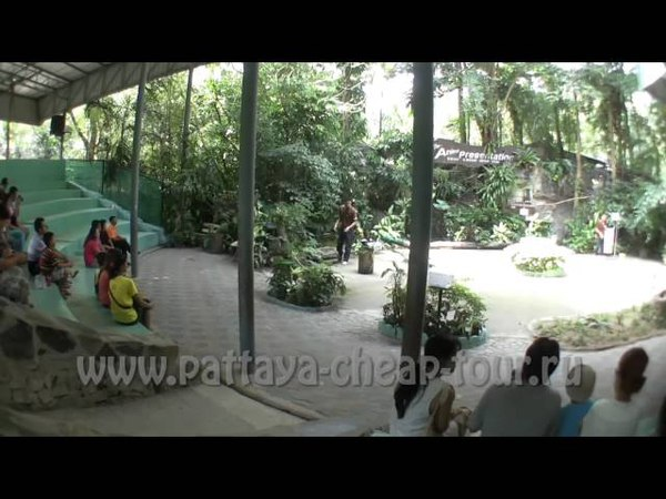 Зоопарк Кхао Кхео в Паттайе Khao Kheow Open Zoo Pattaya. Экскурсии с pattaya-cheap-tour.ru