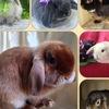 Питомник карликовых кроликов Зайкина усадьба.рф