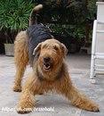 Все собачники беззащитны перед ласкучестью чужих собак…