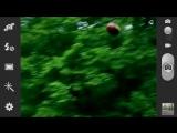 Социальный ролик МЧС России. Берегите лес от пожара!