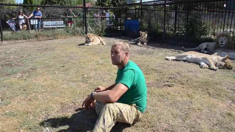 Репортаж среди львов для прессы !