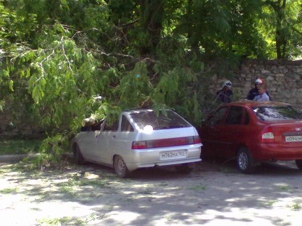 В Таганроге упавшее дерево раздавило три автомобиля! ФОТО