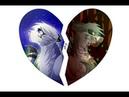 Коты Воители Белогривка и Остролап - Клип Извини, что сердце колит...Заказ