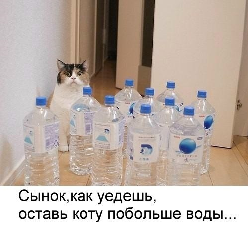 http://cs7053.vk.me/c7008/v7008638/37442/if01P6w6FGU.jpg