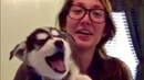SH*T DOGS SAY - HILARIOUS COMPILATION