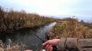 ДА сколько здесь РЫБЫ в этом РУЧЬЕ Рыбалка на спиннинг