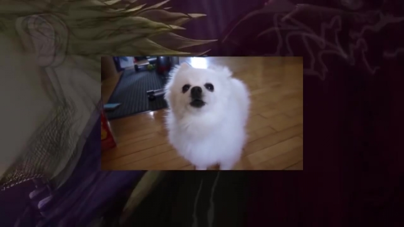Gabe the Dog - Sono Chi no Sadame.mp4