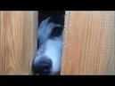 Жизнь собак в отлове.Полигон ТБО. Ханты-Мансийк
