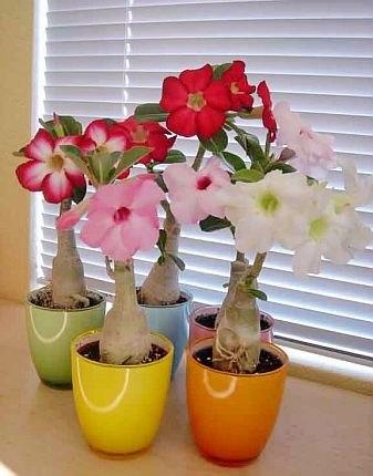 комнатные растения и цветы фото: