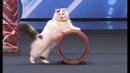 America's Got Talent 2018 - Funniest / Weirdest / Worst Auditions - Part 1