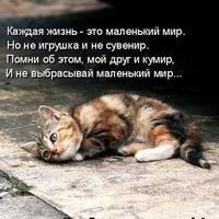 Стихотворение в доме кот