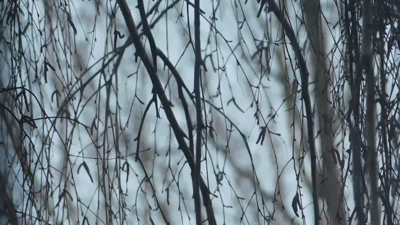 ветки из окна вики