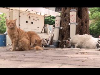 Сирийским кошкам повезло: в Дамаске появились кормушки для бездомных животных