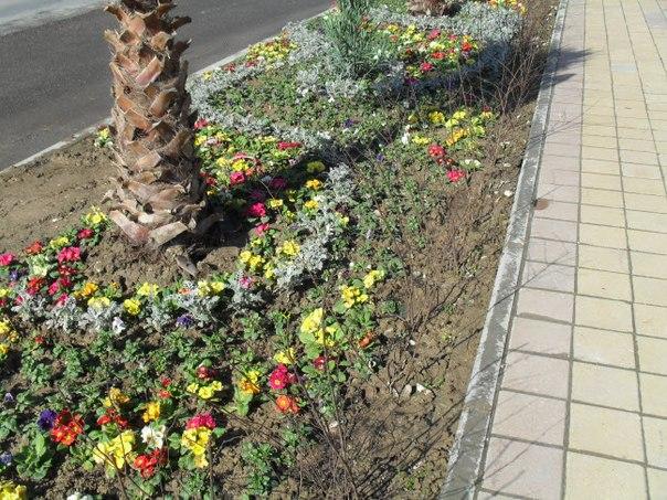 Цветы вдоль тротуара
