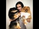 Как зарабатывать деньги на стрижке котов и собак расскажет владелец груминг салона Оскар Ольга Кудинова