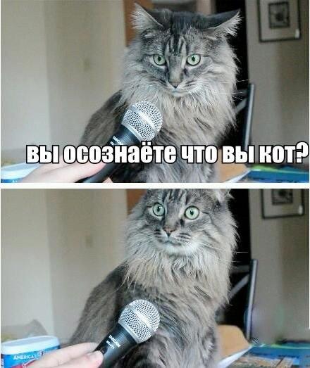 Вы осознаете что вы кот
