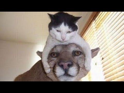 Обхохочешься!! ПОДБОРКА ОЧЕНЬ СМЕШНЫЕ КОТЫ