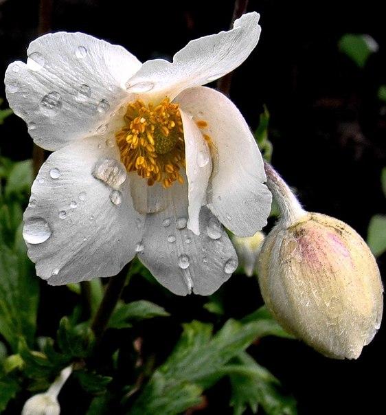 Мои фото цветов...