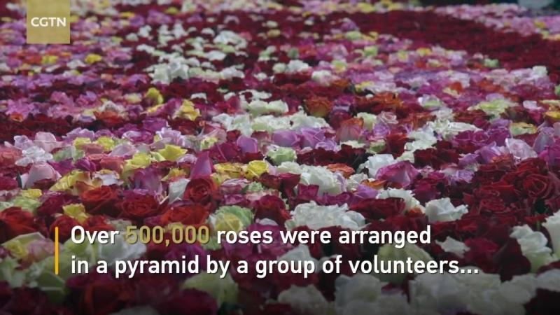 Эквадор надеется побить рекорд Гиннеса с гигантской пирамидой роз