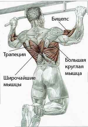 низом грудных мышц.