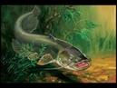Подводная охота Очевидное невероятное, сомы и судаки