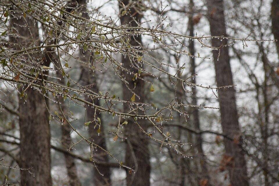 Холодная погода и мокрый снег с дождем ожидаются в Томске в выходные