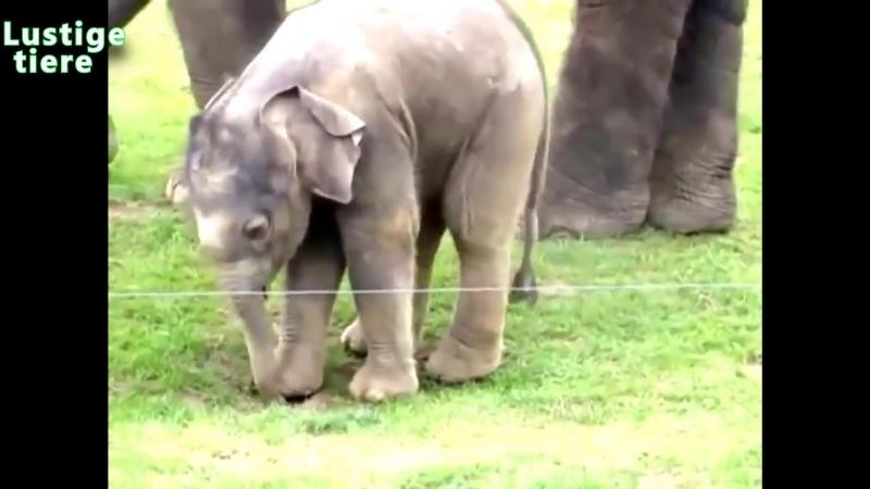 Lustige Tiere_ Elefanten [Neues HD Video April 2014]