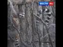 Кошачьи лемуры родились в Московском зоопарке