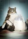 Кот, это тот, который Вас не упрекнёт к походу к холодильнику в нoчи, а присядет рядом… )