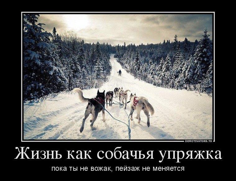 Десять минут чернобыль сегодня фото животных безрассудному человеку могло