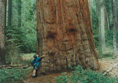 Картинки по запросу Человек обнимает Дерево