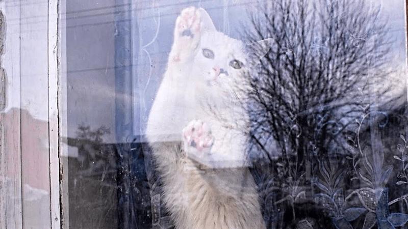 Астерикс моет окно | Asterix washes the window