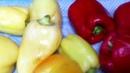 Сушеные Овощи Морковь и Перец в Электросушилке Рецепт