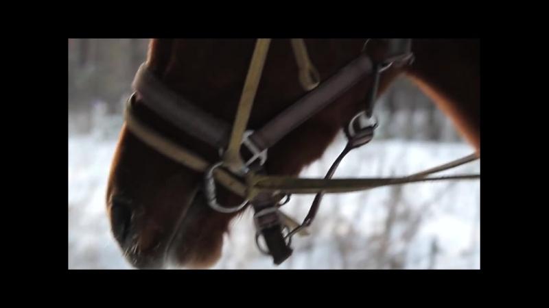 Катание на лошадях на базе отдыха Усадьба Терема