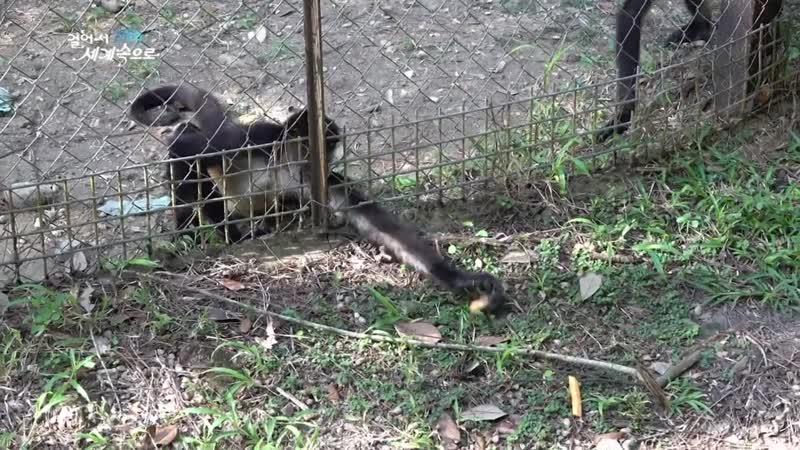 K Belize Travel La Democracia Belize Zoo Tapir Crocodile Toucan Jaguar