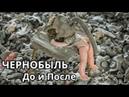 Чернобыль До и после Документальный Научно популярный