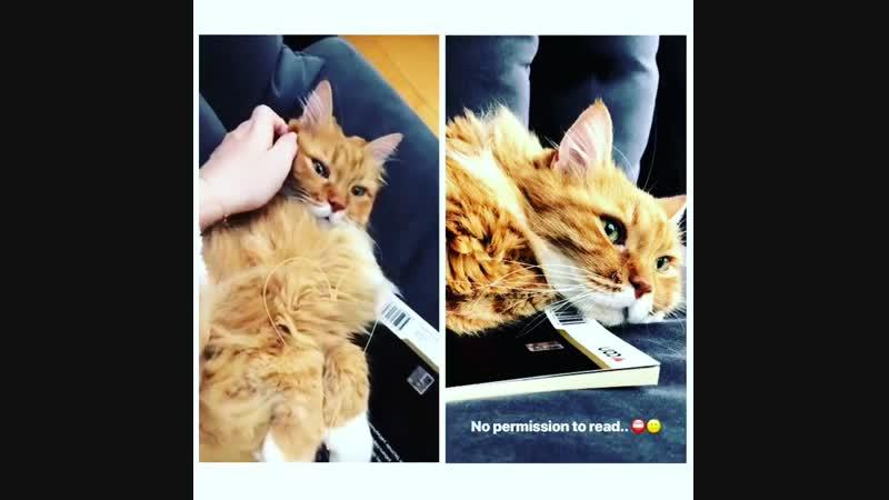 Fahriye ve kedisi 😍 story - Hayvan dostlarımızın insanlardan daha vefalı ve sevgi dolu oldukları kesin 🙏🏻😻🐈 @evcenf - . - . -