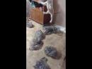 Кот-идиот