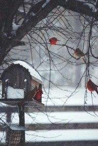 Зима... Морозная и снежная, для кого-то долгожданная, а кем-то не очень любимая, но бесспорно – прекрасная.  - Страница 2 FFRWvxlRR3Y